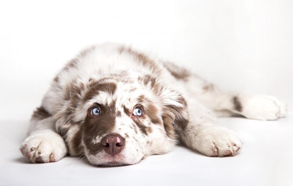 Pupsalarm Blahungen Beim Hund Tierarztliche Klinik Oberhaching