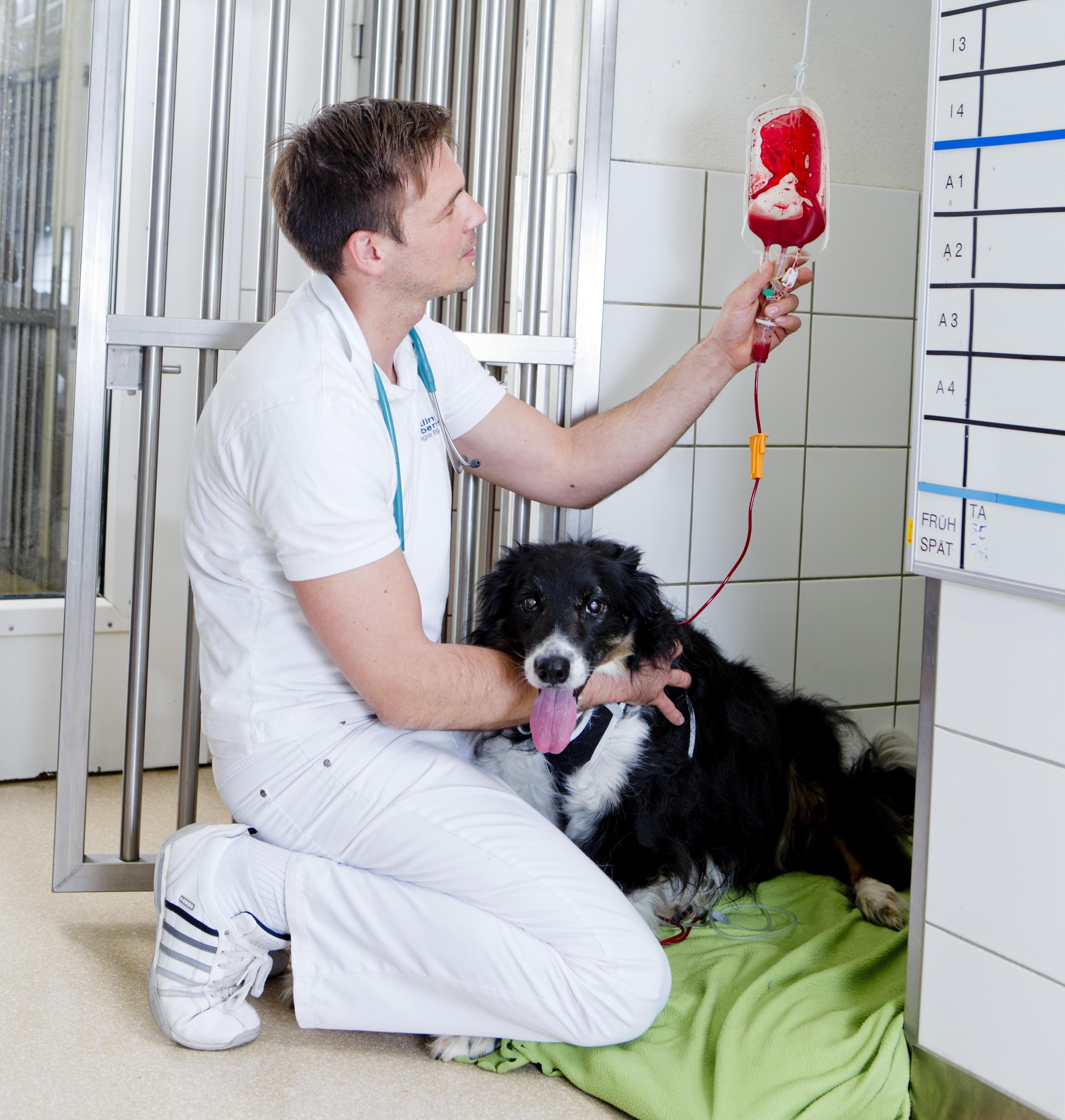 Wenn Vierbeiner Leben Retten Blutspenden Von Hund Und Katze