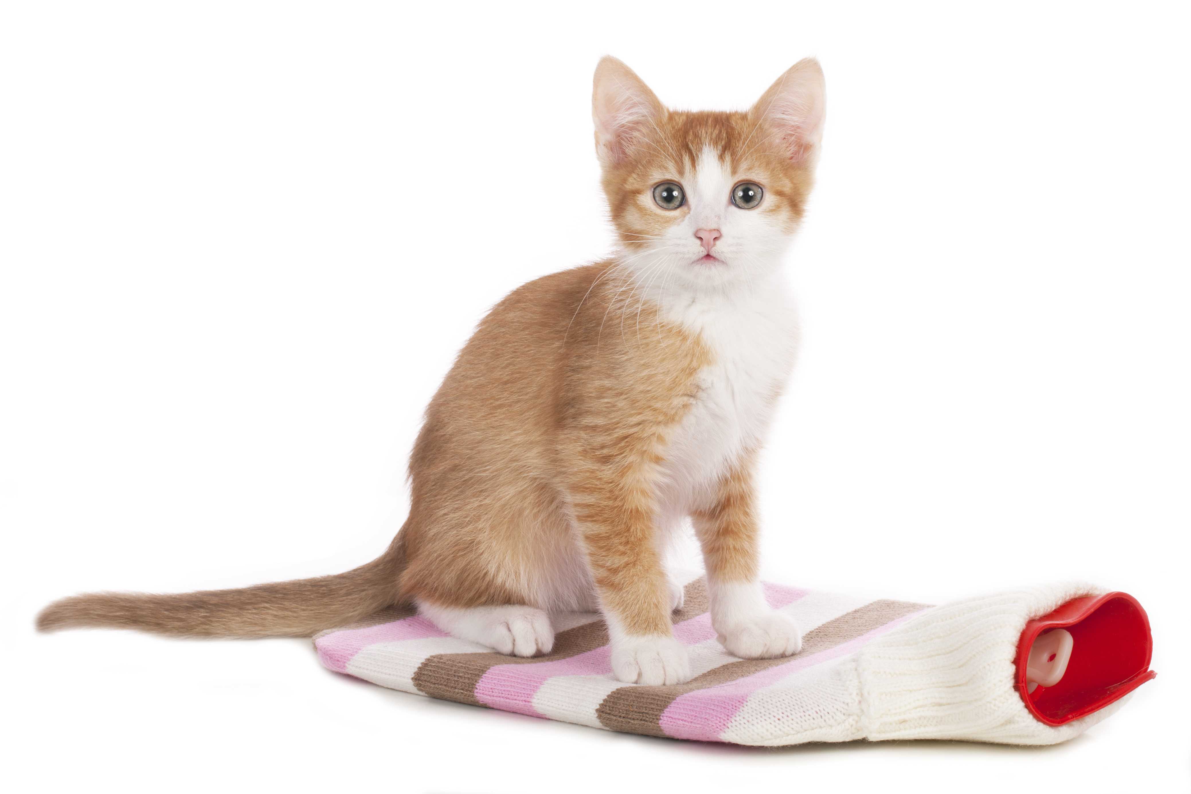 Katzenschnupfen Erkennen Und Behandeln Tierarztliche Klinik