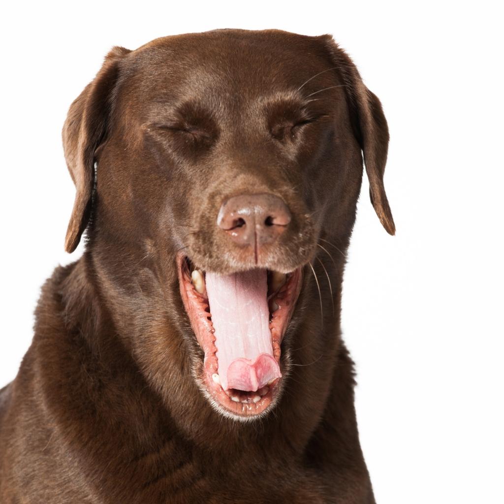 Was Riecht Denn Hier Mundgeruch Beim Hund Erkrankungen Der Maulhohle Tierarztliche Klinik Oberhaching